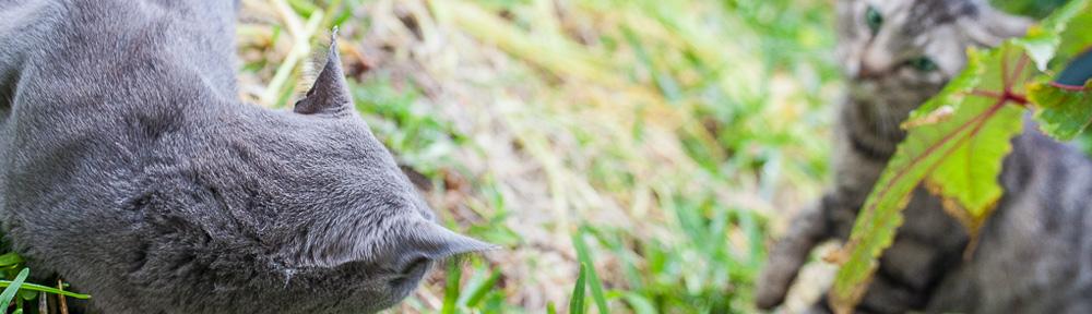 Miniyo, mi gata, rechaza a otro gato en primavera