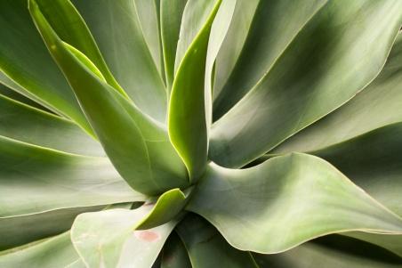 La luz moldea las formas de esta planta crasa. © mateoht 1990-2013 - http://lafotodeldia.net