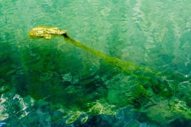 Alga en un lago de Chamonix, Francia. © mateoht 1990-2013 - http://lafotodeldia.net