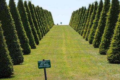 Jardín en Versalles, Francia. © mateoht 1990-2013 - http://lafotodeldia.net