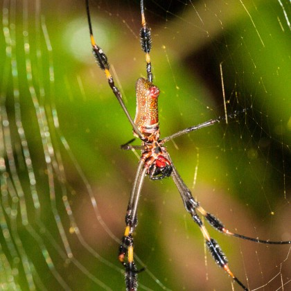 Araña en Costa Rica. © mateoht 1990-2013 - http://lafotodeldia.net