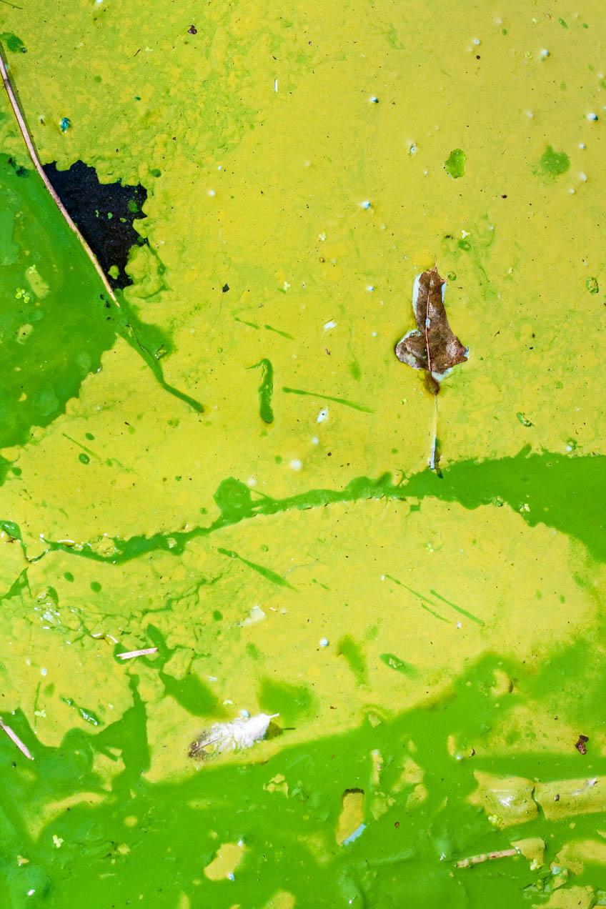Pintura en un estanque en el Brooklyn Botanical Garden, New York. © mateoht 1990-2013 - http://lafotodeldia.net