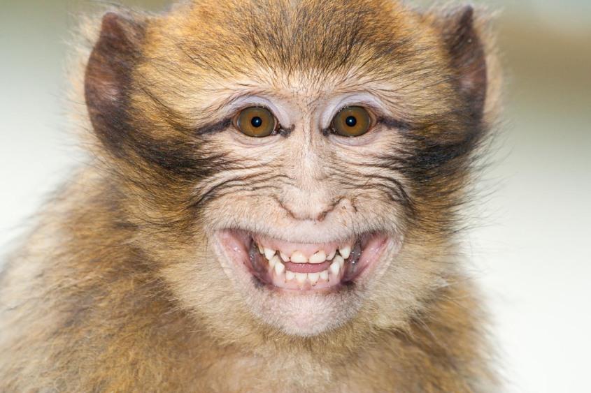 Mono en Azrou, Marruecos. © mateoht 1990-2013 - http://lafotodeldia.net
