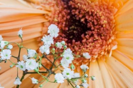 Flor en Alboraya, Valencia. © mateoht 1990-2013 - http://lafotodeldia.net