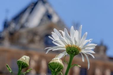 Flores en Versalles, Francia. © mateoht 1990-2013 - http://lafotodeldia.net