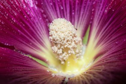 Flor en Somiedo. © mateoht 1990-2013 - http://lafotodeldia.net