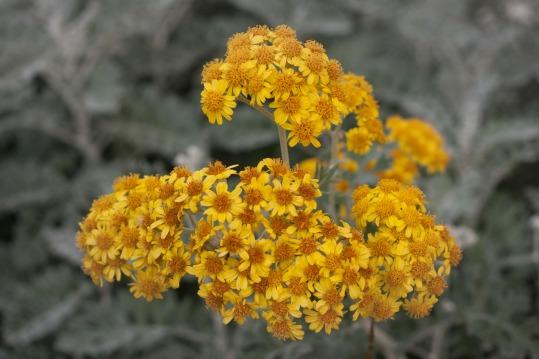 Flores amarillas en Catarroja, Valencia. © mateoht 1990-2013 - http://lafotodeldia.net