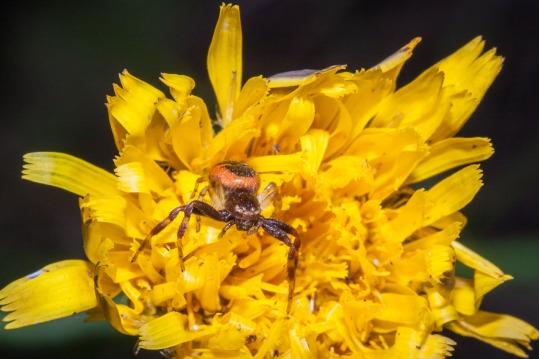 Araña en el campo, en Ayora. © mateoht 1990-2013 - http://lafotodeldia.net