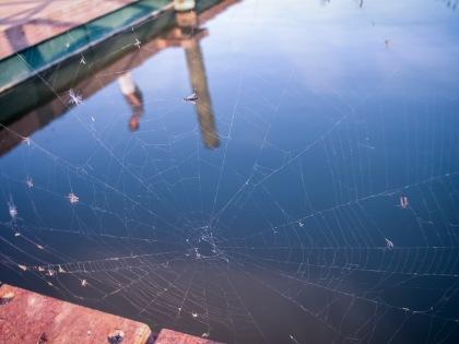 Telaraña en el puerto de Silla. © mateoht 1990-2013 - http://lafotodeldia.net