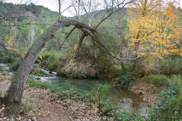 Arbol y rio, en Alcalá de la Selva, Teruel. © mateoht 1990-2013 - http://lafotodeldia.net