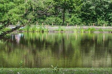 Reflejos en un parque de Amsterdam. © mateoht 1990-2013 - http://lafotodeldia.net