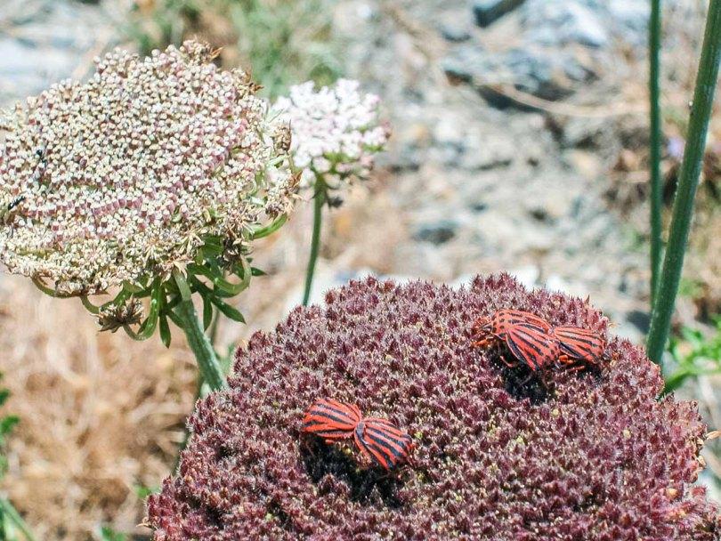 Insectos en una flor. © mateoht 1990-2013 - http://lafotodeldia.net