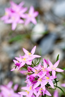 Insectos en las flores. © mateoht 1990-2013 - http://lafotodeldia.net