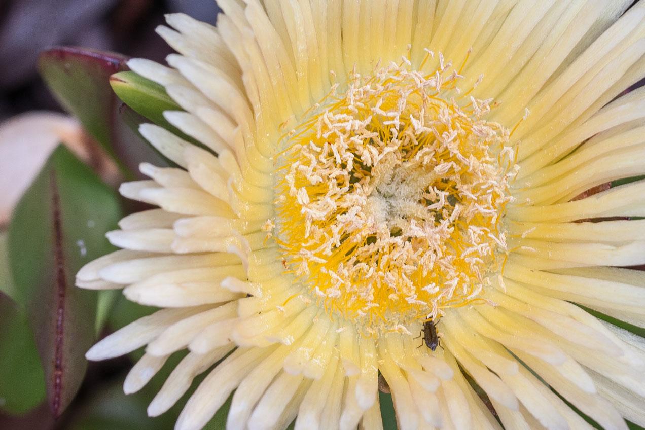 Flor amarilla. © mateoht 1990-2013 - http://lafotodeldia.net