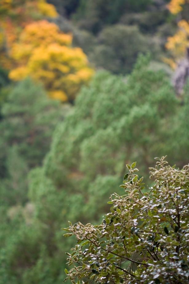 Bosque en Fredes, Castellón. Cartel en Lisboa, Portugal. © mateoht 1990-2013 - http://lafotodeldia.net