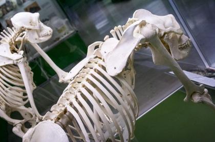 Museo arqueológico, Milán. © mateoht 1990-2013 - http://lafotodeldia.net