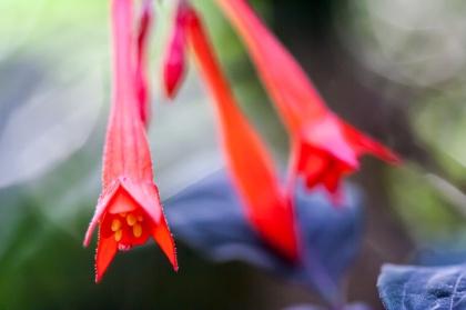 Flores rojas en el jardín botánico. © mateoht 1990-2013 - http://lafotodeldia.net