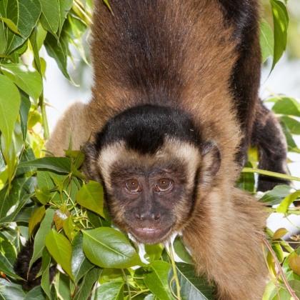 Mono en Terra Natura, Alicante.© mateoht 1990-2013 - http://lafotodeldia.net