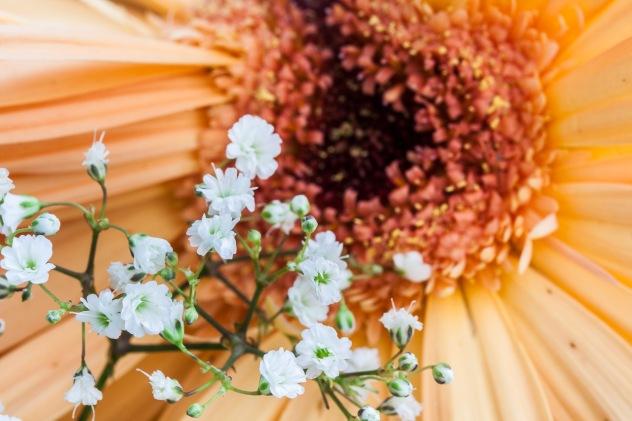 Flores en Alcasser. © mateoht 1990-2013 - http://lafotodeldia.net