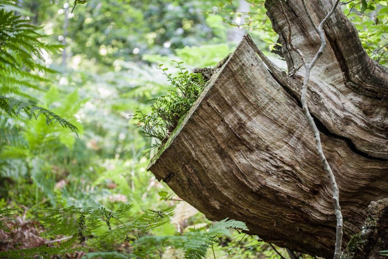 Helechos en el bosque, Asturias. © mateoht 1990-2013 - http://lafotodeldia.net