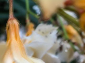 Flores en el jardín, Alcasser. © mateoht 1990-2013 - http://lafotodeldia.net