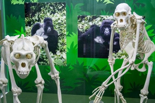 Museo de Ciencias Naturales, Milán. © mateoht 1990-2013 - http://lafotodeldia.net