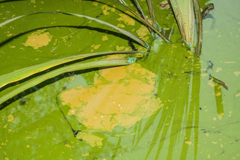 Pintura en un estanque, Brooklyn, New York. © mateoht 1990-2013 - http://lafotodeldia.net