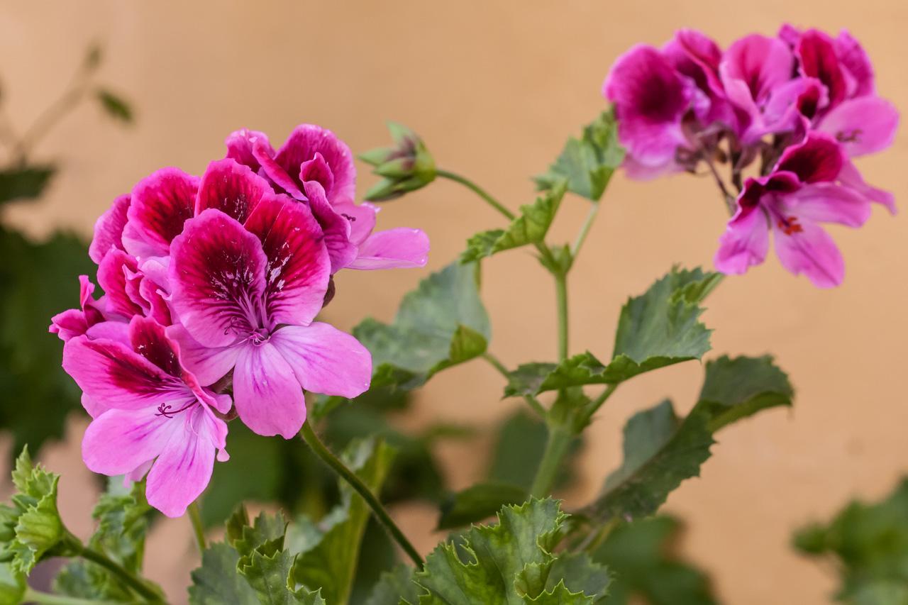Flor del jardín. © mateoht 1990-2013 - http://lafotodeldia.net
