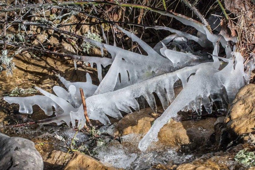 Ramas congeladas, Vistabella, Castellón. © mateoht 1990-2014 - http://lafotodeldia.net