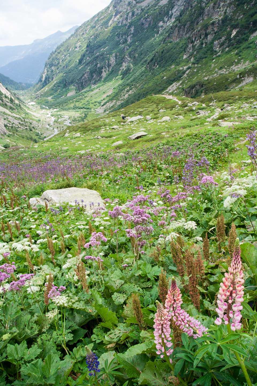 Flores en el valle, Le Brévent, Chamonix, Francia.© mateoht 1990-2013 - http://lafotodeldia.net