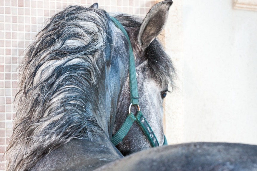 Tzar, el caballo de Vicky. © mateoht 1990-2014 - http://lafotodeldia.net