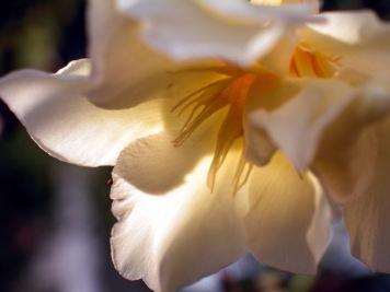 Flor en casa © mateoht 1990-2014 - http://lafotodeldia.net