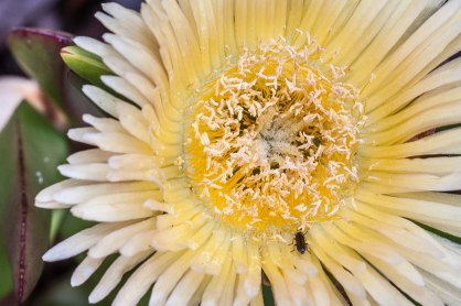 Flor groga. © mateoht 1990-2014 - http://lafotodeldia.net