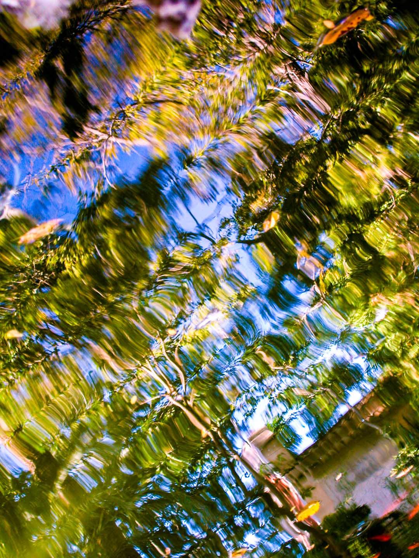 Estanque en La Murta, Alzira. © mateoht 1990-2014 - http://lafotodeldia.net
