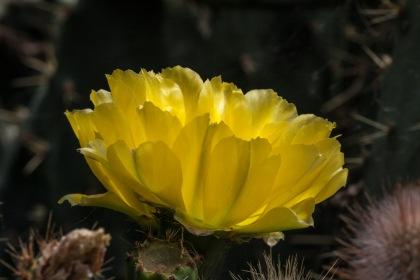 Flor en estanque © mateoht 1990-2014 - http://lafotodeldia.net