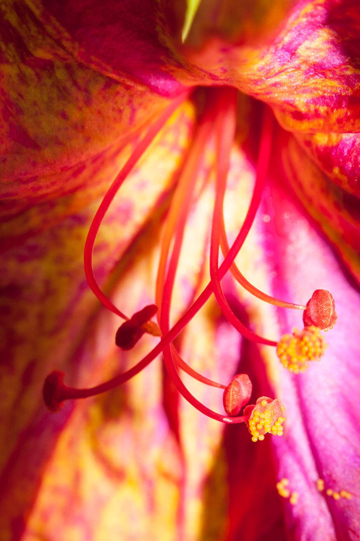 Pistilos de una flor. © mateoht 1990-2013 - http://lafotodeldia.net